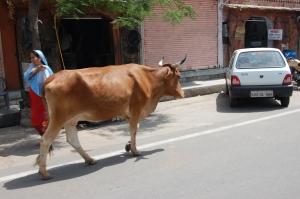 Si, vacas