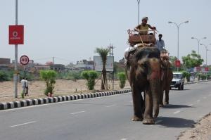 Y tambien elefantes...